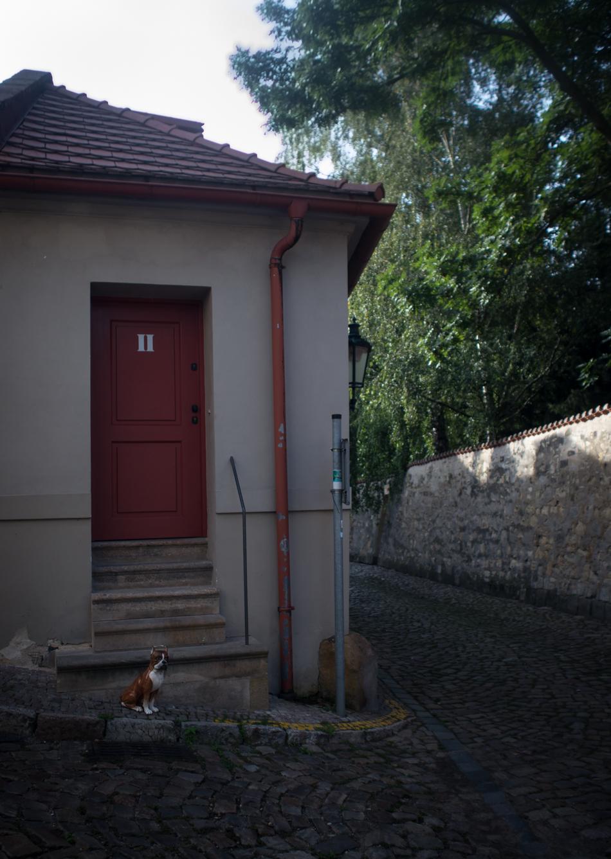 villabetula-1230683